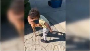 Toddler Plays With Baby Deer In Adorable Viral Video - Sakshi