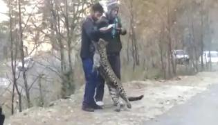 Viral Video Of Leopard Playing With People Raises Concerns - Sakshi