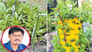 Huge House cultivation in Cities and Towns - Sakshi