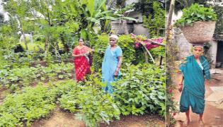 Manikala Tirupatamma Evergreen Farmer Special Story - Sakshi