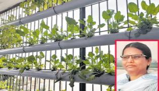 Hydroponic Cultivation Easy - Sakshi