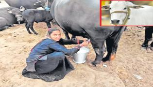 Gujarati woman sells milk worth Rs 1 crore - Sakshi