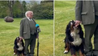 A Hilarious Video On Ireland President Michael D Higgins Dog  - Sakshi