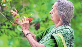 Devaki amma Artificial Forest  - Sakshi
