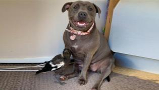 Dog And Bird Mother And Daughter Relationship In Queensland Australia - Sakshi