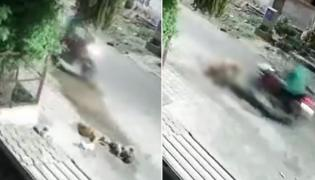 Shocking: Biker Intentionally Crushes Two Puppies In Agra, Video Viral - Sakshi