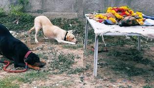 Gujarat Sniffer Dog Meena Condolence Photo Viral - Sakshi