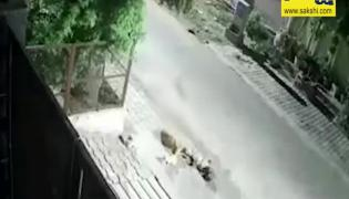 Viral Video: Biker Intentionally Crushes Two Puppies In Agra