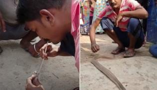 Man Saves a lethal Cobra by blowingair into Mouth-Using a Straw - Sakshi