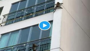 Two Monkeys Playing And Sliding Down  Building s Wall Viral Video - Sakshi