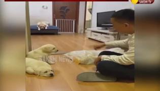 Dog Video Gone Viral In Social Media