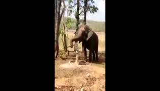 Viral Video: Elephant Intelligence Show Attract Many People On Social Media