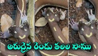 Viral video:Two Haded Snake Swallows Mice - Sakshi