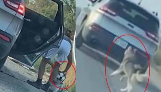 Dog Abandoned On Roadside In Viral Video Texas Owner Arrested - Sakshi