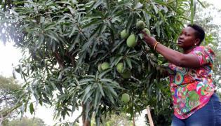 Ugandan cadet pilot flourishes in agriculture abandoning flying dream - Sakshi