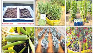 Training on Production of Fermented Cocopeat and Soilless Cultivation of Vegetables - Sakshi