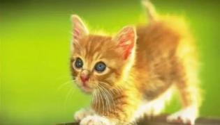 A Cat Reaction To Tom And Jerry Episode Went Viral In Social Media - Sakshi