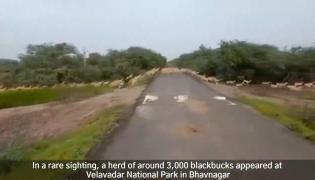 Narendra Modi Shares Blackbucks Video Gone Viral