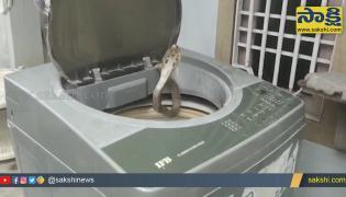 Viral Video: King Cobra Found In Washing Machine At West Godavari