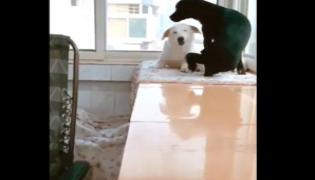Dad Dog Brought Snack To Exhausted Mom Dog Watch This Interesting Video - Sakshi