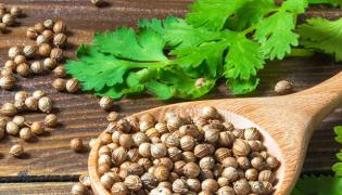 You Must Know These Multiple Health Benefits Of Coriander  - Sakshi