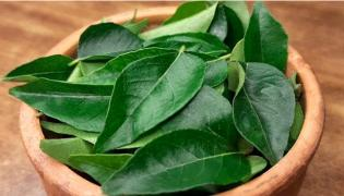 Curry Leaves May Help To Manage Cholesterol In Your Body - Sakshi