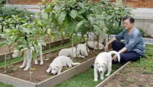 South Korea President Moon Raises Dog Meat Ban - Sakshi
