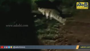 Crocodiles On Roads In Adilabad Video Gone Viral