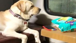 Dog Train Journey From Mumbai To Bhubaneswar Goes Viral  - Sakshi