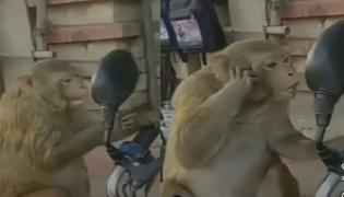 Viral Video: Monkey Checks Himself Out in Bikes Mirror - Sakshi