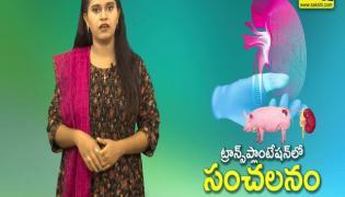 sakshi special video On pig kidney transplant in human body