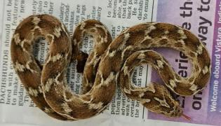 A Deadly Viper Snake Travels India To UK Hidden In Container - Sakshi