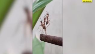 Viral Video: Ant Helps To Its Friends But What Happened Next Is Actually Life Lesson