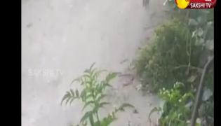 Garam Garam Varthalu: Tiger Toy Scared Monkeys Video Gone Viral