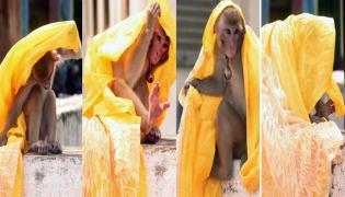 Monkey Photo Story Srikakulam District - Sakshi