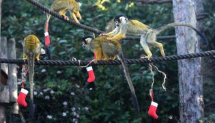 animals celebrating Christmas in pictures - Sakshi
