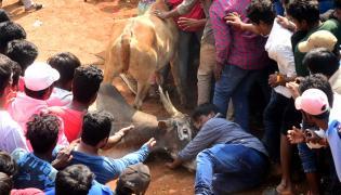 Jallikattu celebrated in Chittoor Photo Gallery - Sakshi