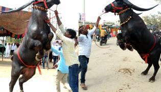 Animal Fest Pashu Sankranthi in Narsingi at Hyderabad - Sakshi