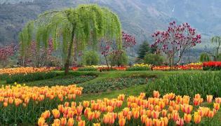 Srinagar Famous Tulip Garden Photo Gallery - Sakshi