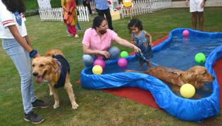 Dog Walking Jumping And Swimming In Hyderabad Photo Gallery - Sakshi