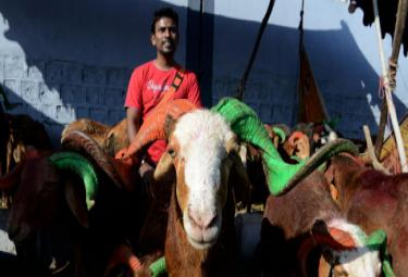 India Decide To Launch Campaign Against Animal Sacrifice - Sakshi