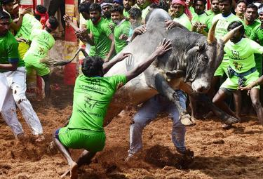 jallikattu in tamilnadu 2019 Photo Gallery - Sakshi