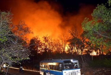 Fire Accident in Tirumala Forest Photo Gallery - Sakshi