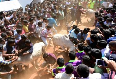 Jallikattu Celebrations in Rangampeta Photo gallery - Sakshi