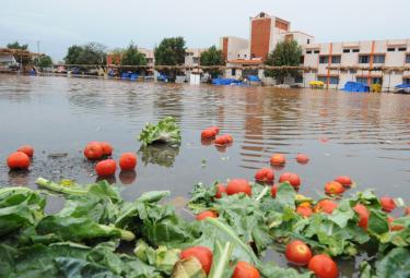 Heavy Rain Andhra Pradesh and Telangana Photo Gallery - Sakshi