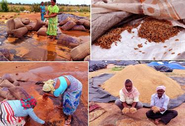 Heavy Rains Remains Huge Loss For Farmers - Sakshi