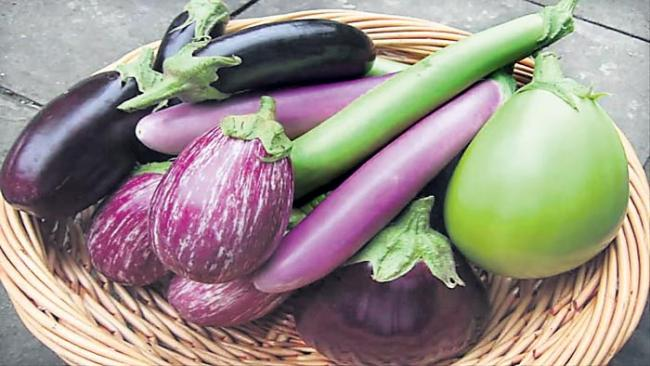 eggplant is good for health