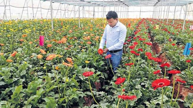 High tech cultivation with pure water