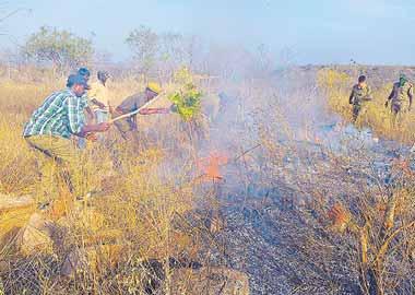 నల్లమల అటవీప్రాంతంలో మంటలు - Sakshi