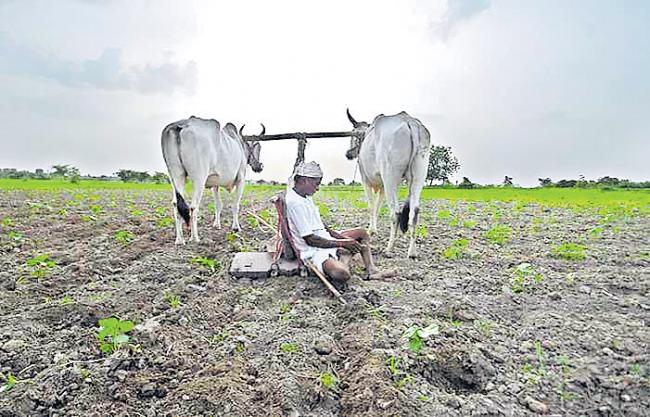 South-West Monsoon Disappoints Telangana